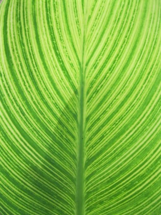 Plant Leaf Texture