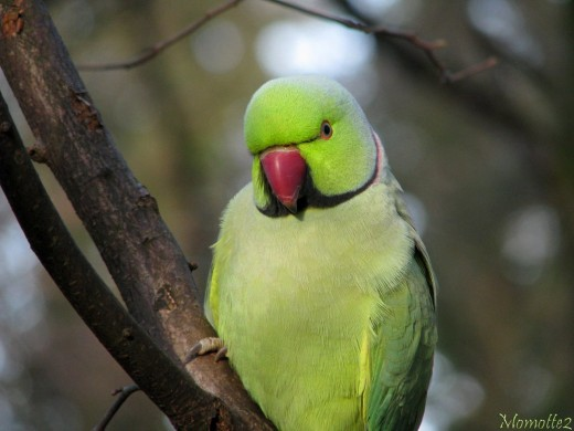essays about parrot in hindi