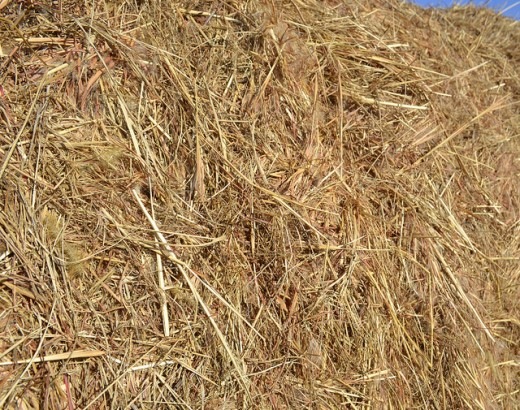 Free Hay and Straw Textures