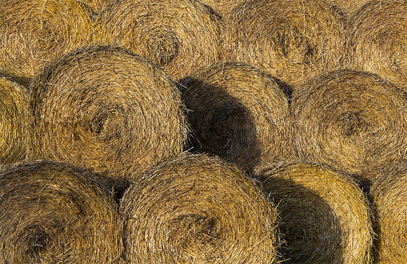 25 High Quality Free Hay and Straw Textures - DesignDune