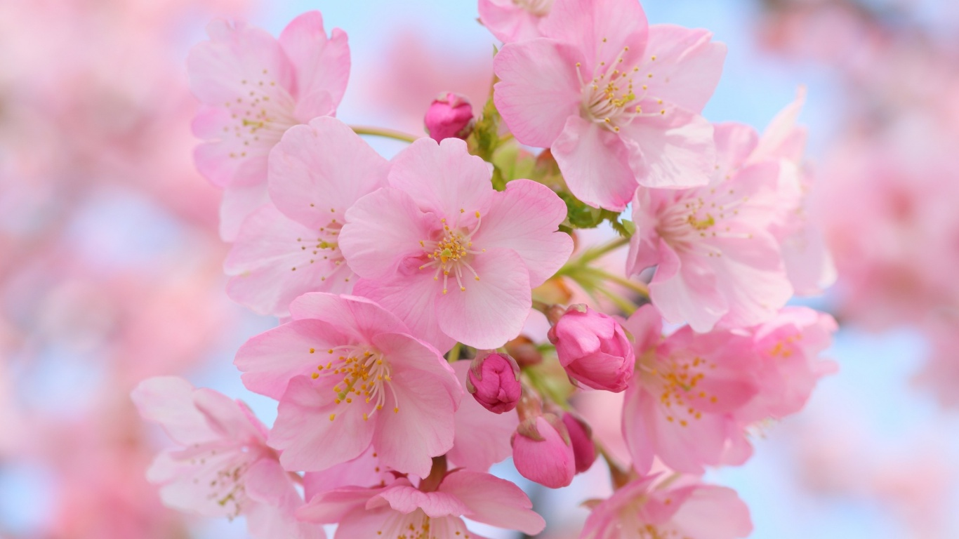 45 Best Free Spring Wallpapers For Desktop 2018 Designdune