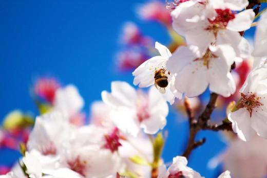 Spring Wallpaper for Background