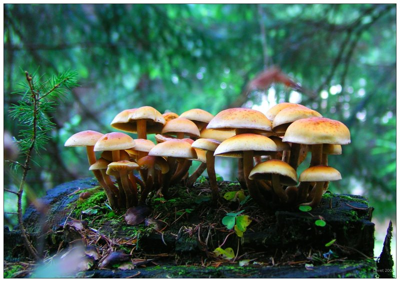 25 cool mushroom pictures