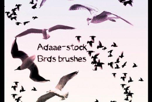 bird photoshop brushes